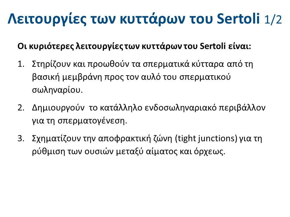 Λειτουργίες των κυττάρων του Sertoli 1/2 Οι κυριότερες λειτουργίες των κυττάρων του Sertoli είναι: 1.Στηρίζουν και προωθούν τα σπερματικά κύτταρα από