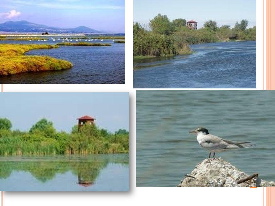 Η ΑΡΧΑΙΑ ΟΝΟΜΑΣΙΑ Ο ποταμός Γαλλικός στην αρχαιότητα ονομαζόταν Εχέδωρος για τα δώρα που έφερνε στους ανθρώπους.