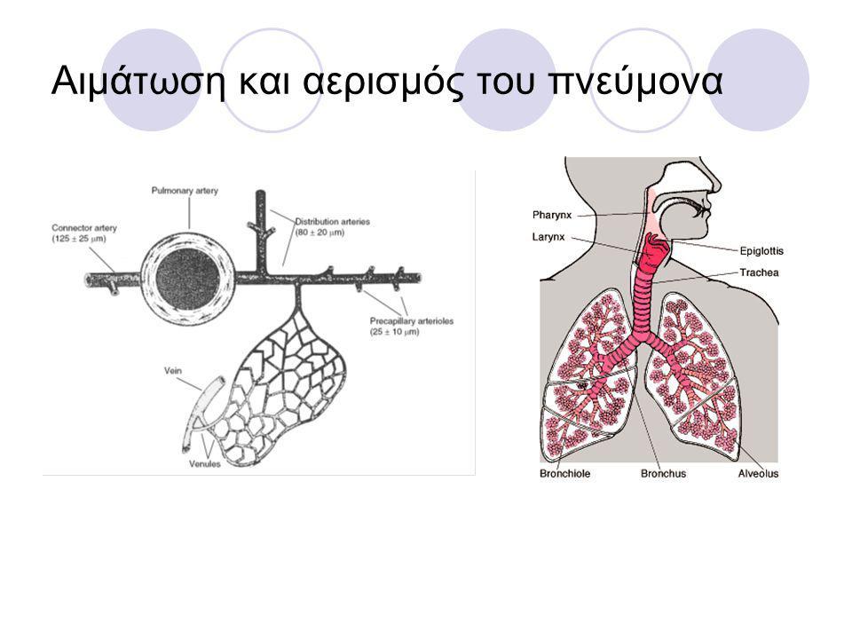 Αιμάτωση και αερισμός του πνεύμονα