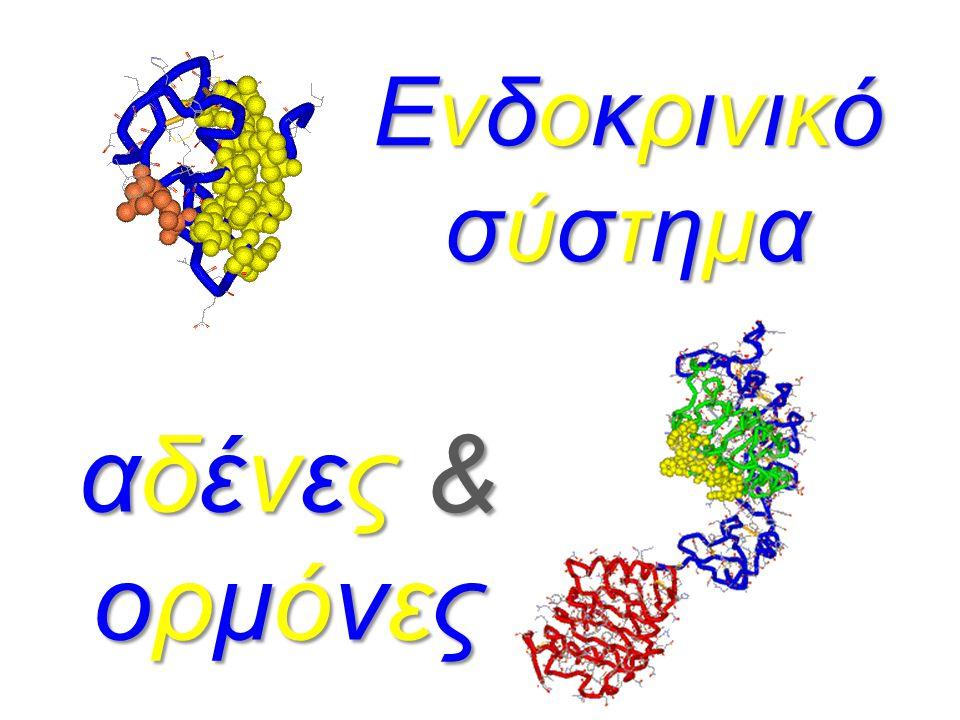 εκκρίματα ουσίες παραγόμενες από τον αδένα επιφάνεια δέρματος ορμόνες εκκρινόμενες στο αίμα κυκλοφορία αίματος στα τριχοειδή