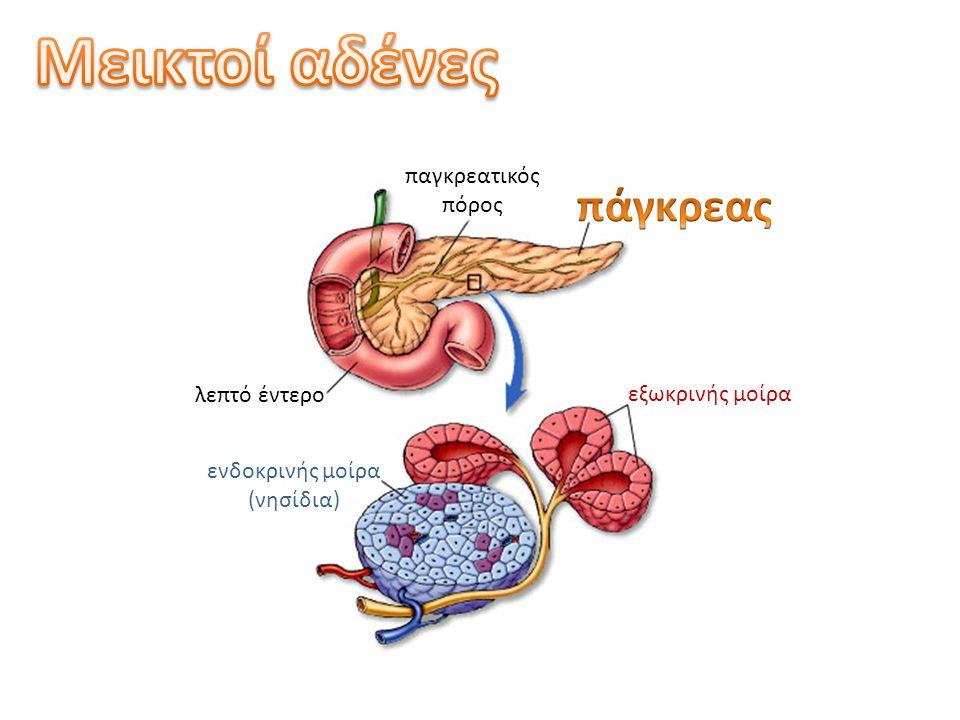 ορμόνεςνευρικό σύστημα Οι ορμόνες μαζί με το νευρικό σύστημα ρυθμίζουν τη φυσιολογία του οργανισμού.