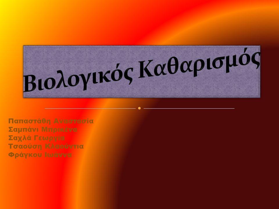 Παπαστάθη Αναστασία Σαμπάνι Μπρικένα Σαχλά Γεωργία Τσαούση Κλαούντια Φράγκου Ιωάννα