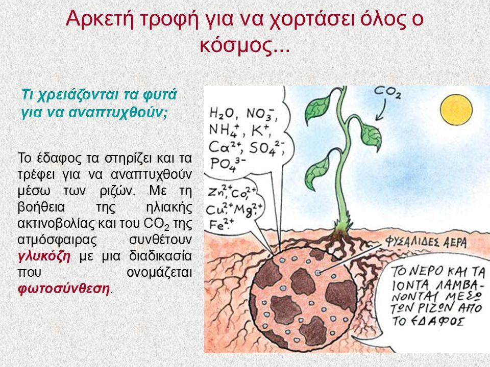 Aρκετή τροφή για να χορτάσει όλος ο κόσμος... Τι χρειάζονται τα φυτά για να αναπτυχθούν; Το έδαφος τα στηρίζει και τα τρέφει για να αναπτυχθούν μέσω τ