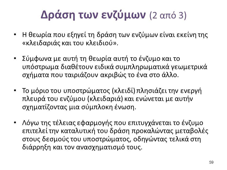 Δράση των ενζύμων (2 από 3) Η θεωρία που εξηγεί τη δράση των ενζύμων είναι εκείνη της «κλειδαριάς και του κλειδιού». Σύμφωνα με αυτή τη θεωρία αυτή το