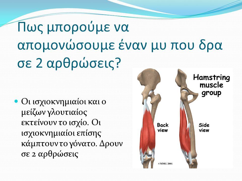 Πως μπορούμε να απομονώσουμε έναν μυ που δρα σε 2 αρθρώσεις? Οι ισχιοκνημιαίοι και ο μείζων γλουτιαίος εκτείνουν το ισχίο. Οι ισχιοκνημιαίοι επίσης κά