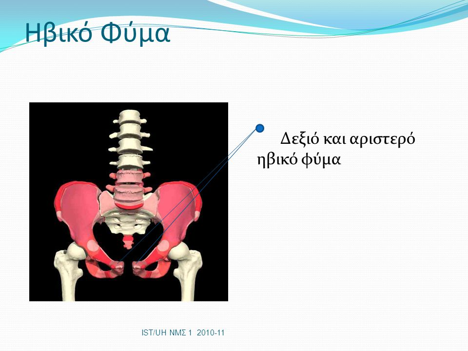 Ισχιακό Κύρτωμα Ισχιακό Ισχιακό κύρτωμα IST/UH ΝΜΣ 1 2010-11 Ιερολαγόνιες αρθρώσεις ιερό λαγόνιο