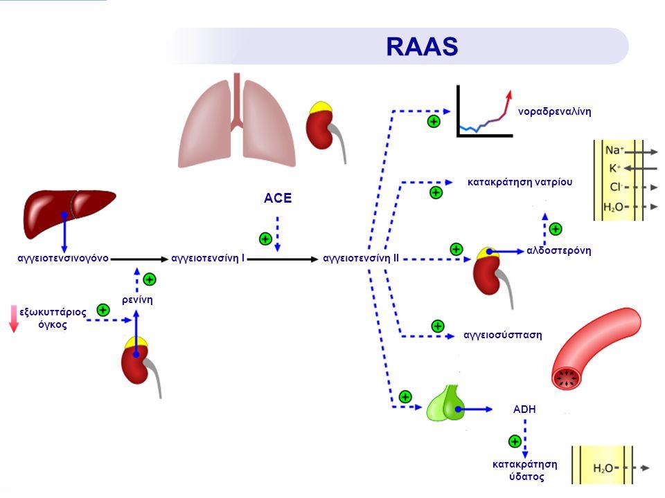 αγγειοτενσινογόνοαγγειοτενσίνη Ιαγγειοτενσίνη ΙΙ ρενίνη νοραδρεναλίνη κατακράτηση νατρίου αλδοστερόνη αγγειοσύσπαση ADH κατακράτηση ύδατος RAAS ACE εξ