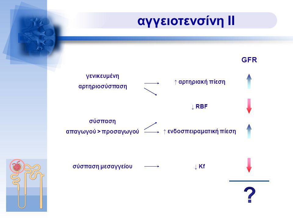 αγγειοτενσίνη ΙΙ γενικευμένη αρτηριοσύσπαση ↑ αρτηριακή πίεση σύσπαση απαγωγού > προσαγωγού ↓ RBF ↑ ενδοσπειραματική πίεση ↓ Kfσύσπαση μεσαγγείου GFR