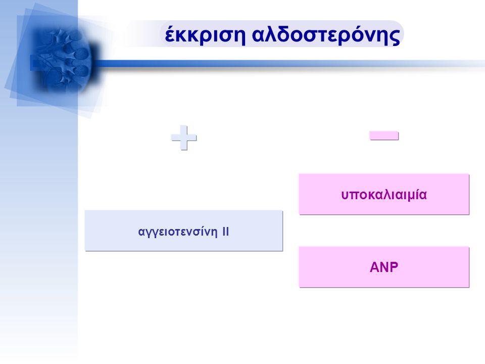 αγγειοτενσίνη ΙΙ έκκριση αλδοστερόνης υποκαλιαιμία ΑΝΡ