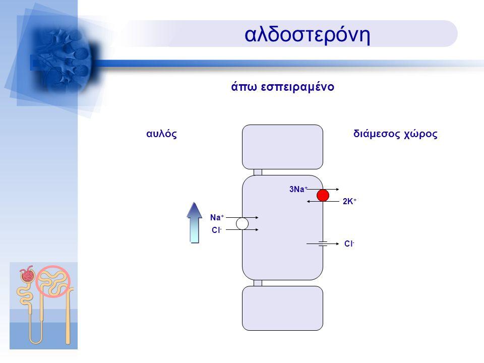 Cl - αλδοστερόνη διάμεσος χώρος άπω εσπειραμένο 3Na + 2K+2K+ αυλός Na + Cl -