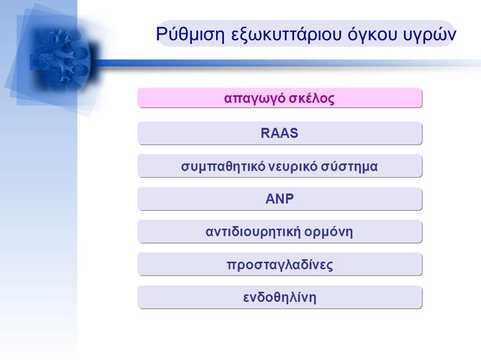 Ρύθμιση εξωκυττάριου όγκου υγρών απαγωγό σκέλος RAAS συμπαθητικό νευρικό σύστημα ΑΝΡ αντιδιουρητική ορμόνη προσταγλαδίνες ενδοθηλίνη