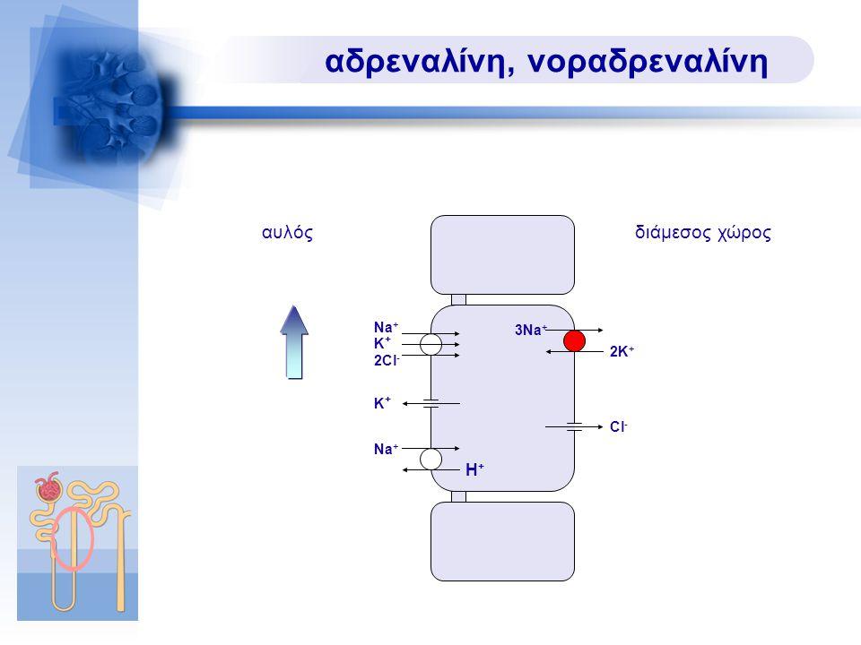 αδρεναλίνη, νοραδρεναλίνη Na + Κ+Κ+ αυλόςδιάμεσος χώρος 2Cl - Cl - Na + H+H+ Κ+Κ+ 3Na + 2K+2K+