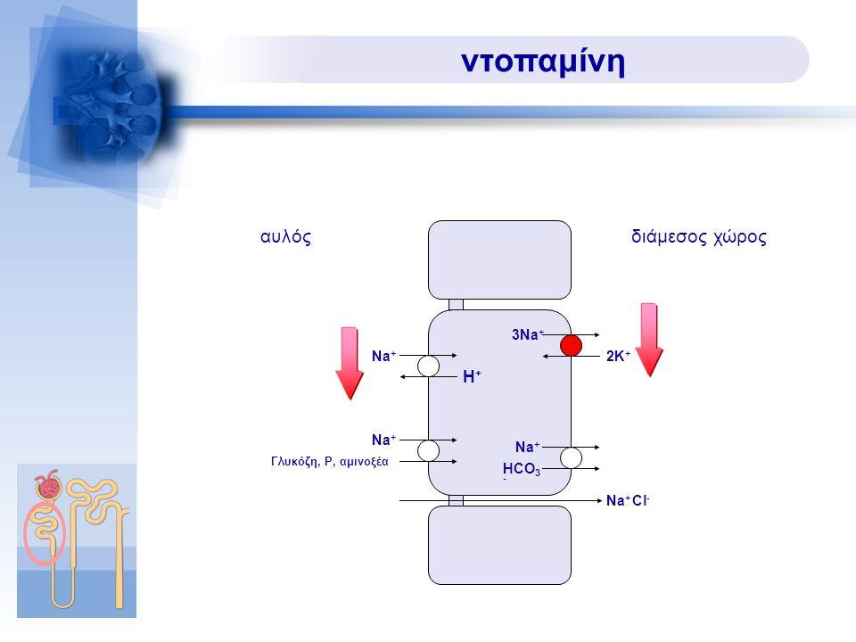 ντοπαμίνη Na + Na + Cl - Na + H+H+ HCO 3 - Γλυκόζη, P, αμινοξέα αυλόςδιάμεσος χώρος 3Na + 2K+2K+