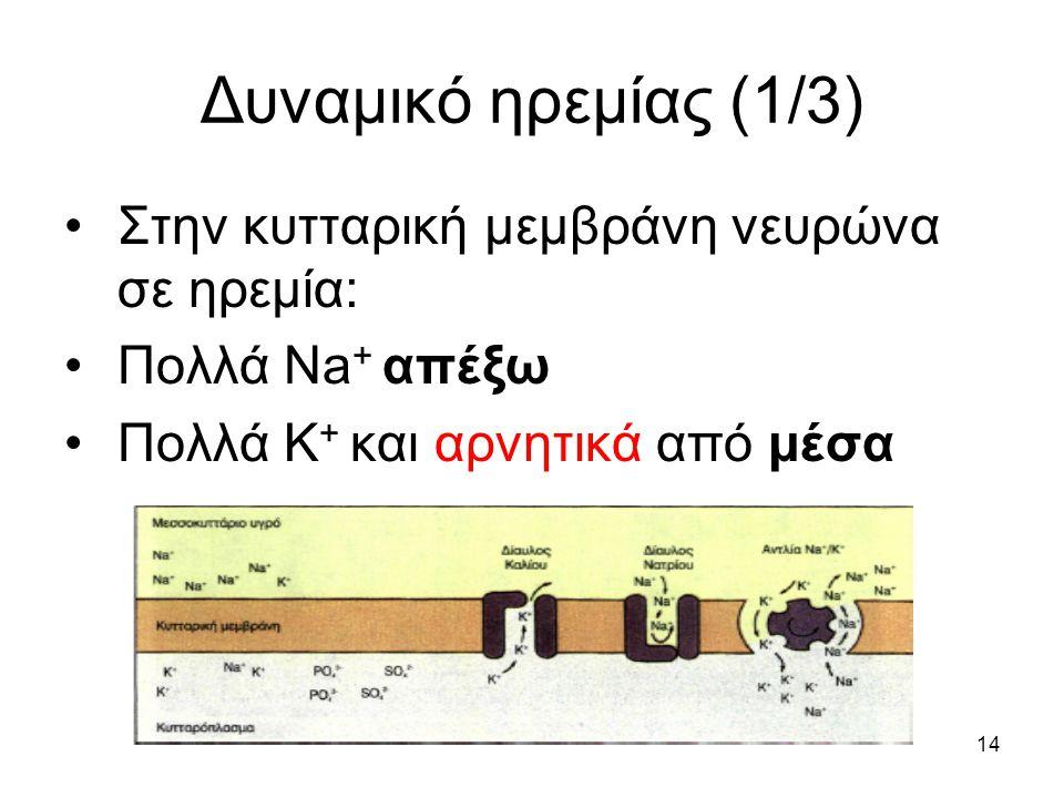 14 Δυναμικό ηρεμίας (1/3) Στην κυτταρική μεμβράνη νευρώνα σε ηρεμία: Πολλά Na + απέξω Πολλά Κ + και αρνητικά από μέσα