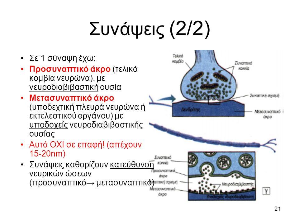 21 Συνάψεις (2/2) Σε 1 σύναψη έχω: Προσυναπτικό άκρο (τελικά κομβία νευρώνα), με νευροδιαβιβαστική ουσία Μετασυναπτικό άκρο (υποδεχτική πλευρά νευρώνα ή εκτελεστικού οργάνου) με υποδοχείς νευροδιαβιβαστικής ουσίας Αυτά ΟΧΙ σε επαφή.