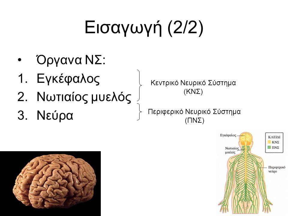 6 Εισαγωγή (2/2) Όργανα ΝΣ: 1.Εγκέφαλος 2.Νωτιαίος μυελός 3.Νεύρα Κεντρικό Νευρικό Σύστημα (ΚΝΣ) Περιφερικό Νευρικό Σύστημα (ΠΝΣ)