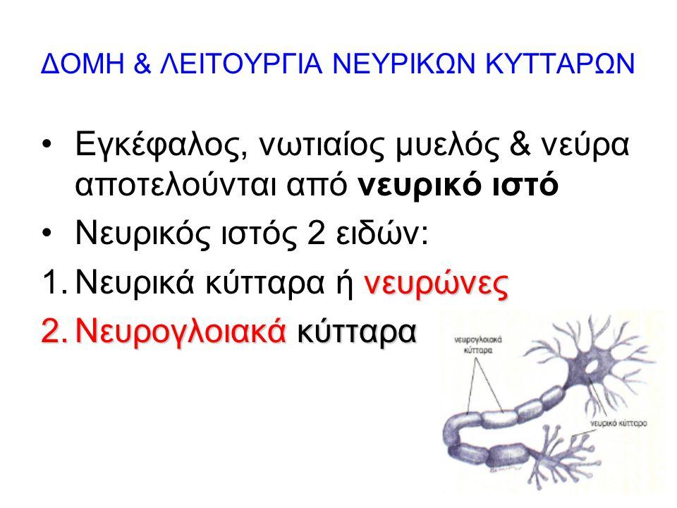 7 ΔΟΜΗ & ΛΕΙΤΟΥΡΓΙΑ ΝΕΥΡΙΚΩΝ ΚΥΤΤΑΡΩΝ Εγκέφαλος, νωτιαίος μυελός & νεύρα αποτελούνται από νευρικό ιστό Νευρικός ιστός 2 ειδών: νευρώνες 1.Νευρικά κύτταρα ή νευρώνες 2.Νευρογλοιακά κύτταρα