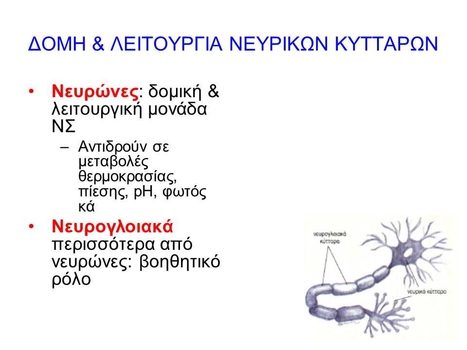 8 ΔΟΜΗ & ΛΕΙΤΟΥΡΓΙΑ ΝΕΥΡΙΚΩΝ ΚΥΤΤΑΡΩΝ Νευρώνες: δομική & λειτουργική μονάδα ΝΣ –Αντιδρούν σε μεταβολές θερμοκρασίας, πίεσης, pH, φωτός κά Νευρογλοιακά περισσότερα από νευρώνες: βοηθητικό ρόλο