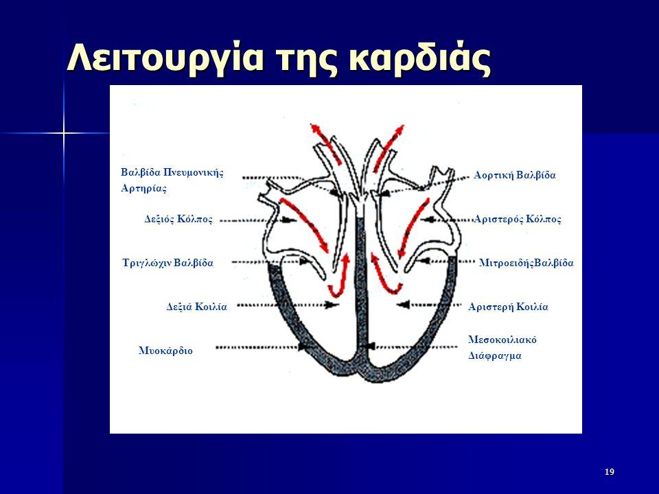 Λειτουργία της καρδιάς 19 Βαλβίδα Πνευμονικής Αρτηρίας Δεξιός Κόλπος Τριγλώχιν Βαλβίδα Δεξιά Κοιλία Μυοκάρδιο Αορτική Βαλβίδα Αριστερός Κόλπος Μιτροει