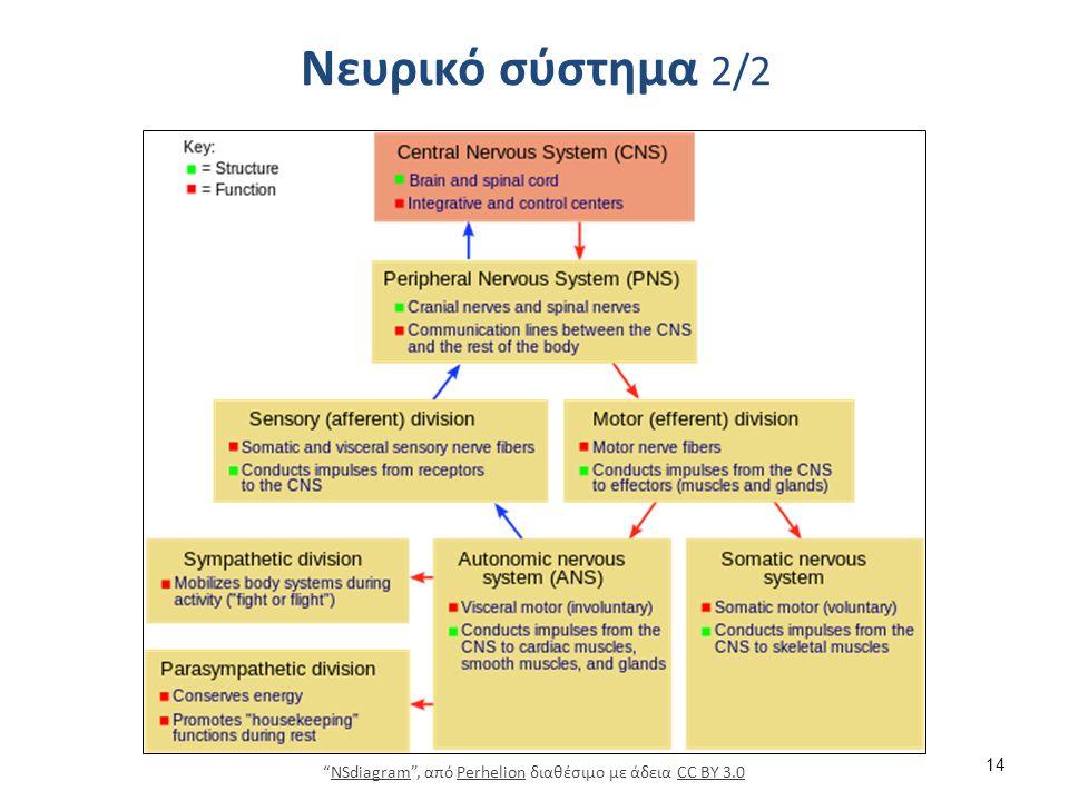 """Νευρικό σύστημα 2/2 14 """"NSdiagram"""", από Perhelion διαθέσιμο με άδεια CC BY 3.0NSdiagramPerhelionCC BY 3.0"""