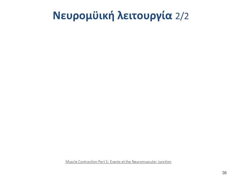 Νευρομϋική λειτουργία 2/2 Muscle Contraction Part 1: Events at the Neuromuscular Junction 36