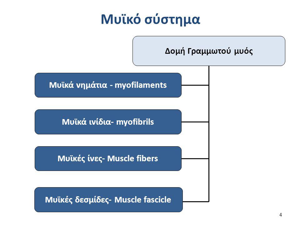 Δομή Γραμμωτού μυός Μυϊκά νημάτια - myofilaments Μυϊκά ινίδια- myofibrils Μυϊκές ίνες- Muscle fibers Μυϊκές δεσμίδες- Muscle fascicle Μυϊκό σύστημα 4