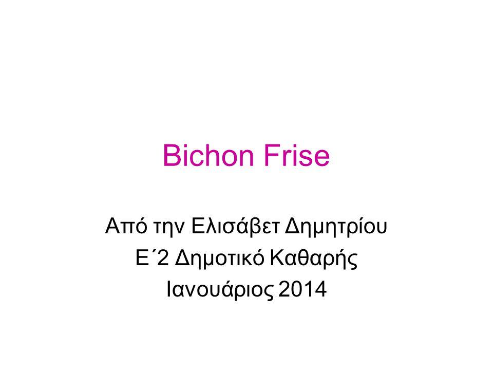 Bichon Frise Από την Ελισάβετ Δημητρίου Ε΄2 Δημοτικό Καθαρής Ιανουάριος 2014