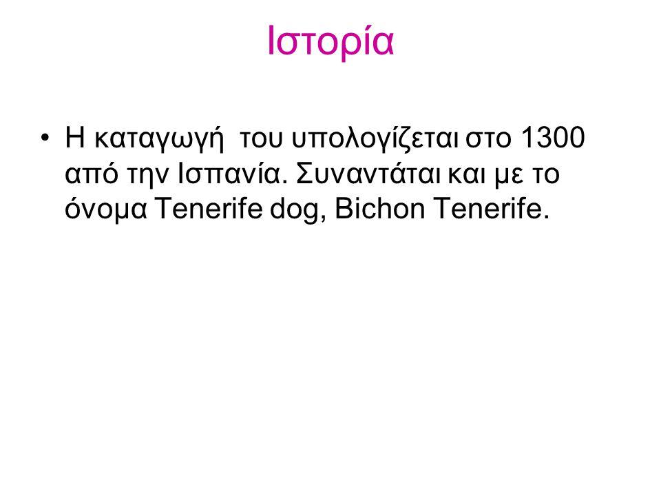 Η καταγωγή του υπολογίζεται στο 1300 από την Ισπανία. Συναντάται και με το όνομα Tenerife dog, Bichon Tenerife. Ιστορία