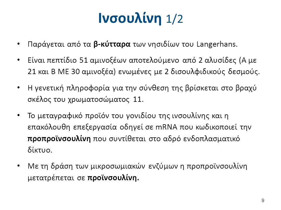 Ινσουλίνη 1/2 Παράγεται από τα β-κύτταρα των νησιδίων του Langerhans. Είναι πεπτίδιο 51 αμινοξέων αποτελούμενο από 2 αλυσίδες (Α με 21 και Β ΜΕ 30 αμι