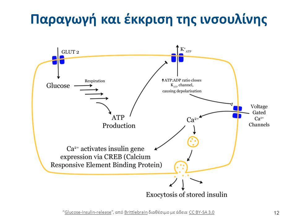 """Παραγωγή και έκκριση της ινσουλίνης """"Glucose-insulin-release"""", από Brittlebrain διαθέσιμο με άδεια CC BY-SA 3.0Glucose-insulin-releaseBrittlebrainCC B"""