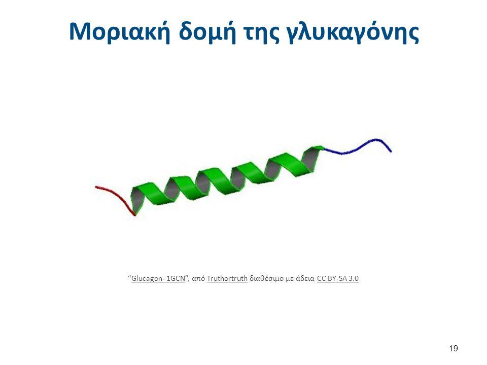 """Μοριακή δομή της γλυκαγόνης 19 """"Glucagon- 1GCN"""", από Truthortruth διαθέσιμο με άδεια CC BY-SA 3.0Glucagon- 1GCNTruthortruthCC BY-SA 3.0"""