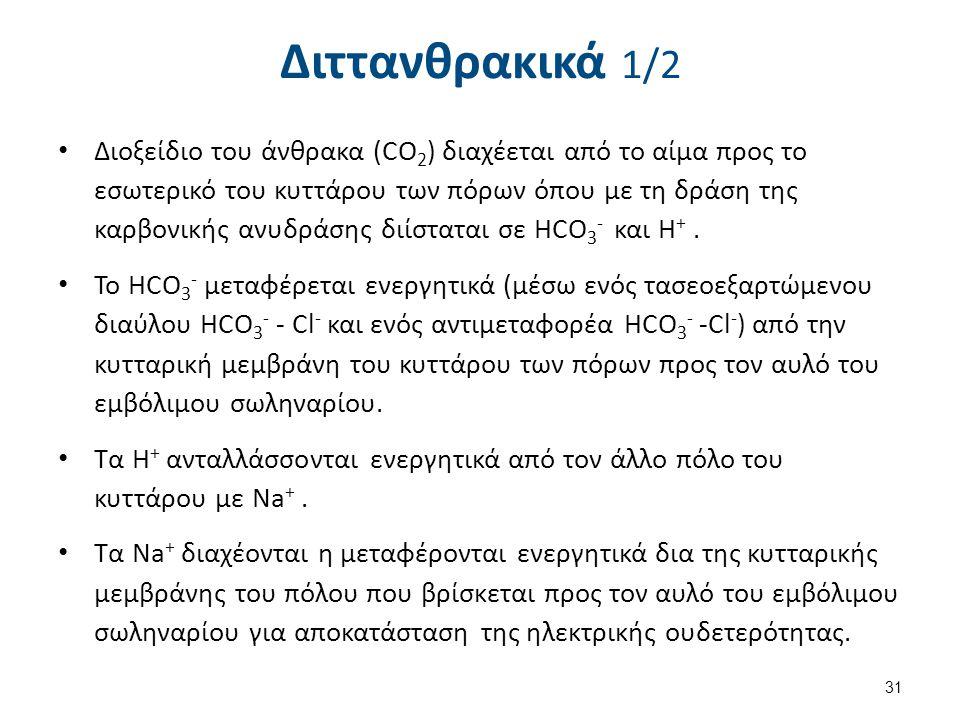 Διττανθρακικά 1/2 Διοξείδιο του άνθρακα (CO 2 ) διαχέεται από το αίμα προς το εσωτερικό του κυττάρου των πόρων όπου με τη δράση της καρβονικής ανυδράσ