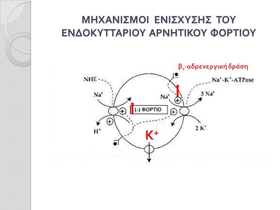 ΜΗΧΑΝΙΣΜΟΙ ΕΝΙΣΧΥΣΗΣ ΤΟΥ ΕΝΔΟΚΥΤΤΑΡΙΟΥ ΑΡΝΗΤΙΚΟΥ ΦΟΡΤΙΟΥ β 2 -αδρενεργική δράση Κ+ Κ+