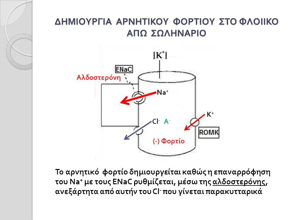 ΔΗΜΙΟΥΡΓΙΑ ΑΡΝΗΤΙΚΟΥ ΦΟΡΤΙΟΥ ΣΤΟ ΦΛΟΙΙΚΟ ΑΠΩ ΣΩΛΗΝΑΡΙΟ Na + Αλδοστερόνη (-) Φορτίο Cl - K+K+ Το αρνητικό φορτίο δημιουργείται καθώς η επαναρρόφηση του