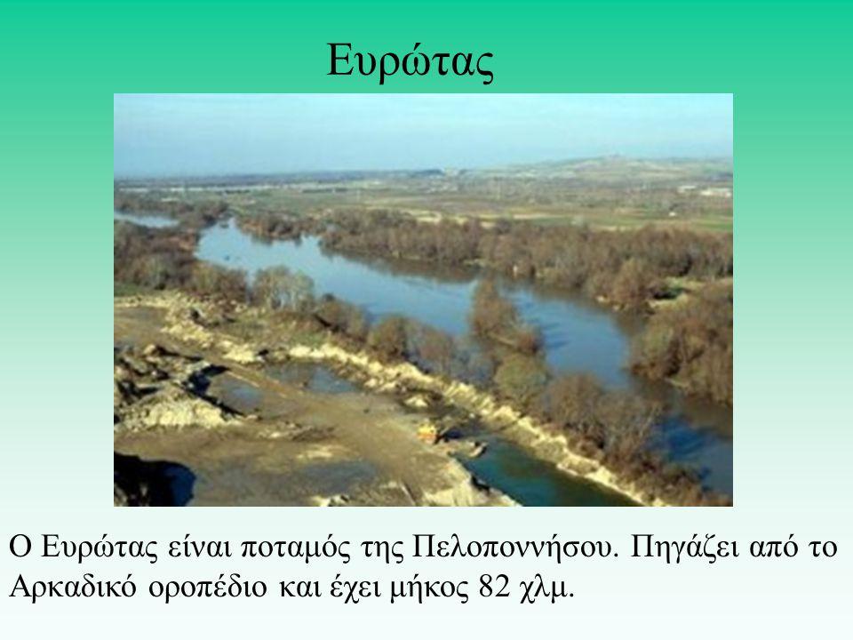 Ο Ευρώτας είναι ποταμός της Πελοποννήσου.Πηγάζει από το Αρκαδικό οροπέδιο και έχει μήκος 82 χλμ.