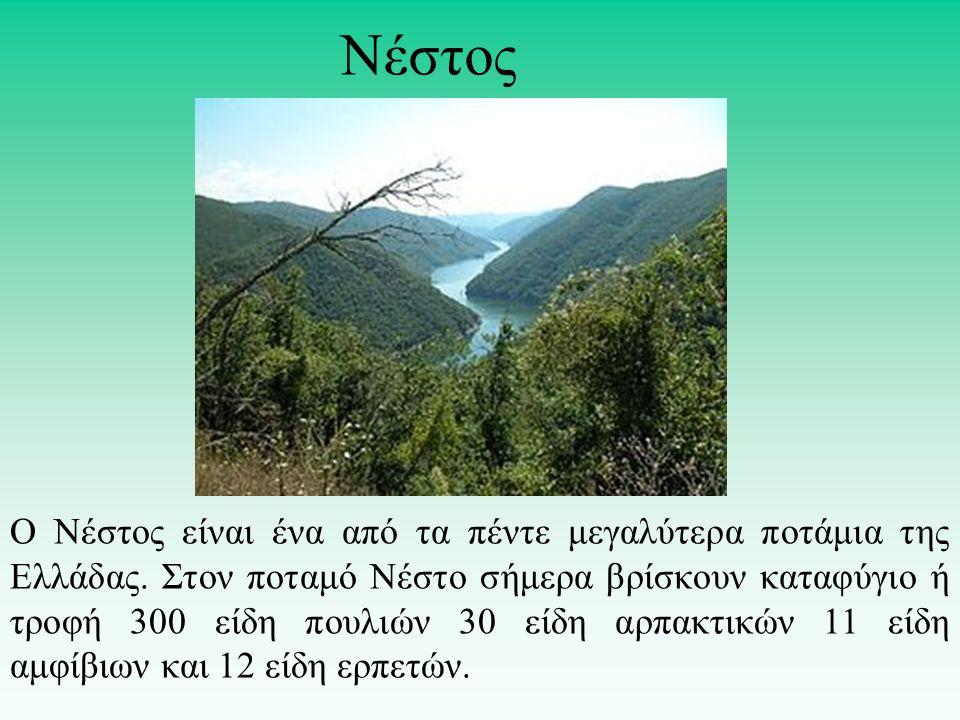 Ο Νέστος είναι ένα από τα πέντε μεγαλύτερα ποτάμια της Ελλάδας. Στον ποταμό Νέστο σήμερα βρίσκουν καταφύγιο ή τροφή 300 είδη πουλιών 30 είδη αρπακτικώ