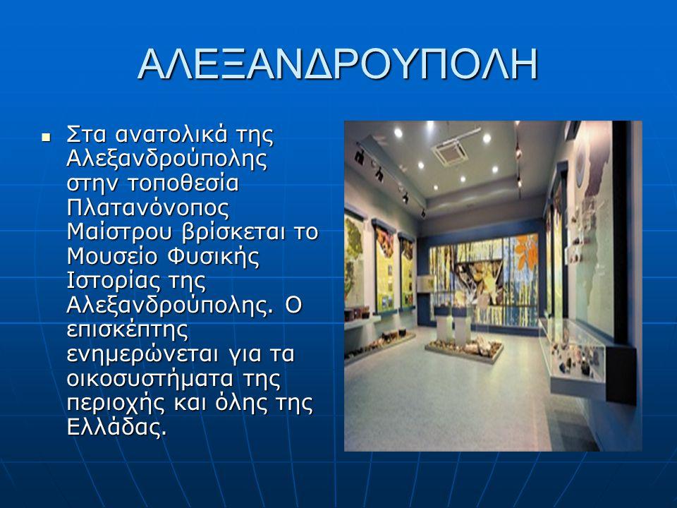 ΑΛΕΞΑΝΔΡΟΥΠΟΛΗ Στα ανατολικά της Αλεξανδρούπολης στην τοποθεσία Πλατανόνοπος Μαίστρου βρίσκεται το Μουσείο Φυσικής Ιστορίας της Αλεξανδρούπολης. Ο επι