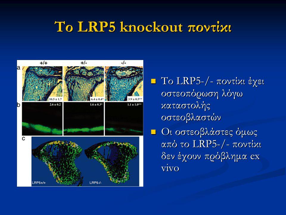 Το LRP5 knockout ποντίκι Το LRP5-/- ποντίκι έχει οστεοπόρωση λόγω καταστολής οστεοβλαστών Το LRP5-/- ποντίκι έχει οστεοπόρωση λόγω καταστολής οστεοβλαστών Οι οστεοβλάστες όμως από το LRP5-/- ποντίκι δεν έχουν πρόβλημα ex vivo Οι οστεοβλάστες όμως από το LRP5-/- ποντίκι δεν έχουν πρόβλημα ex vivo