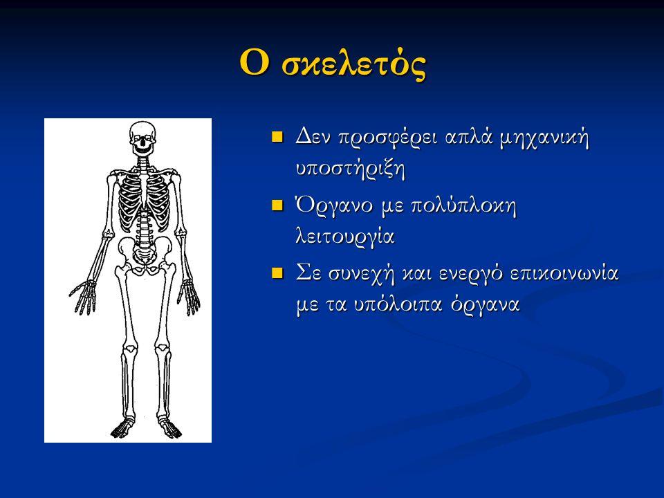 Ο σκελετός Δεν προσφέρει απλά μηχανική υποστήριξη Δεν προσφέρει απλά μηχανική υποστήριξη Όργανο με πολύπλοκη λειτουργία Όργανο με πολύπλοκη λειτουργία Σε συνεχή και ενεργό επικοινωνία με τα υπόλοιπα όργανα Σε συνεχή και ενεργό επικοινωνία με τα υπόλοιπα όργανα