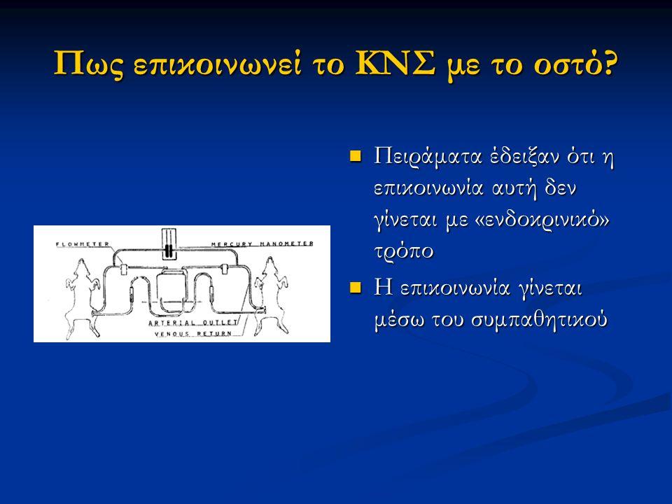 Πως επικοινωνεί το ΚΝΣ με το οστό.