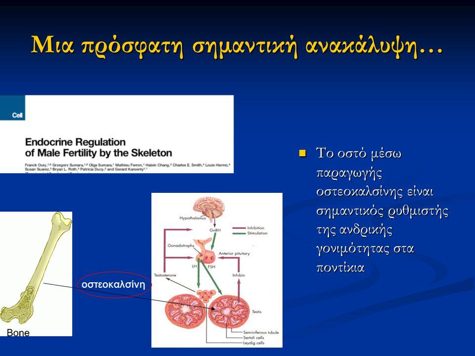 Η λεπτίνη ρυθμίζει την οστική μάζα μέσω του ΚΝΣ και όχι περιφερικά… Η λεπτίνη δεν δρα απευθείας στους οστεοβλάστες Η λεπτίνη δεν δρα απευθείας στους οστεοβλάστες Η χορήγηση λεπτίνης κατευθείαν στο ΚΝΣ μειώνει την οστική μάζα όχι μόνον στα ob/ob ποντίκια αλλά και στα φυσιολογικά!!!.