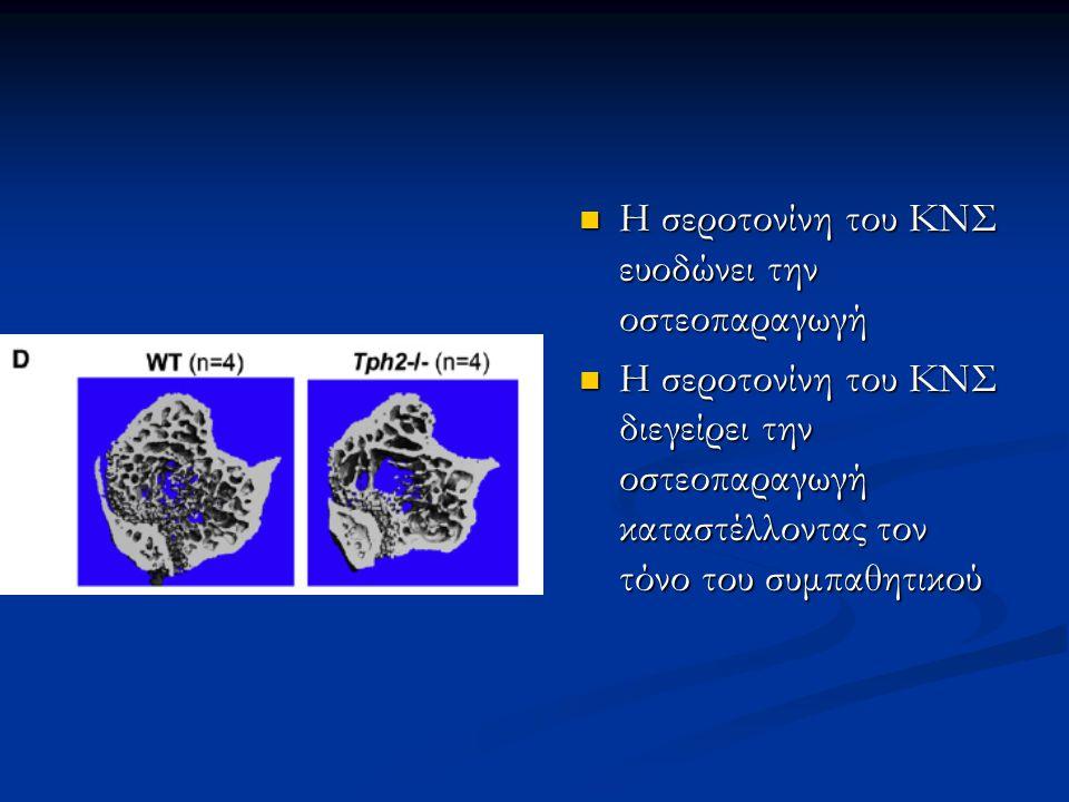 Η σεροτονίνη του ΚΝΣ ευοδώνει την οστεοπαραγωγή Η σεροτονίνη του ΚΝΣ ευοδώνει την οστεοπαραγωγή Η σεροτονίνη του ΚΝΣ διεγείρει την οστεοπαραγωγή καταστέλλοντας τον τόνο του συμπαθητικού Η σεροτονίνη του ΚΝΣ διεγείρει την οστεοπαραγωγή καταστέλλοντας τον τόνο του συμπαθητικού