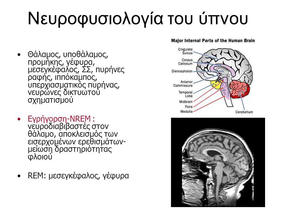 Νευροφυσιολογία του ύπνου Θάλαμος, υποθάλαμος, προμήκης, γέφυρα, μεσεγκέφαλος, ΣΣ, πυρήνες ραφής, ιππόκαμπος, υπερχιασματικός πυρήνας, νευρώνες δικτυω