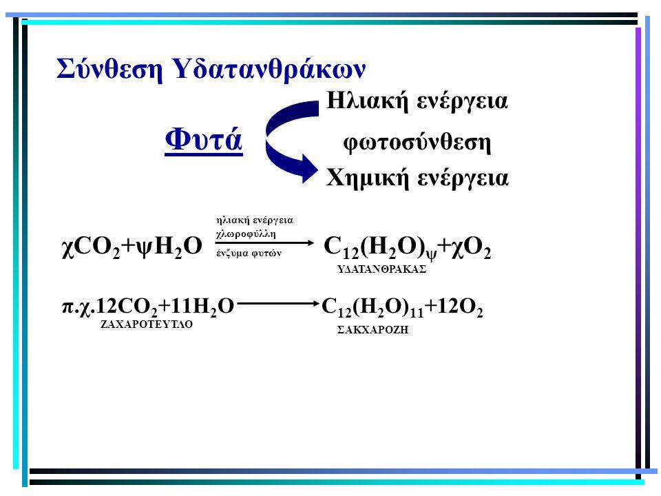 Σύνθεση Υδατανθράκων Ηλιακή ενέργεια Φυτά φωτοσύνθεση Χημική ενέργεια χCO 2 +ψH 2 O C 12 (H 2 O) ψ +χΟ 2 π.χ.12CO 2 +11H 2 O C 12 (H 2 O) 11 +12O 2 ΥΔ