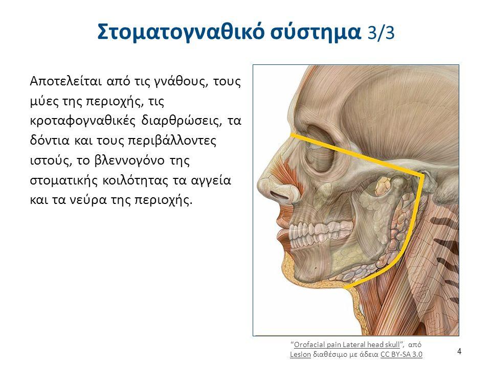 Στοματογναθικό σύστημα 3/3 Αποτελείται από τις γνάθους, τους μύες της περιοχής, τις κροταφογναθικές διαρθρώσεις, τα δόντια και τους περιβάλλοντες ιστούς, το βλεννογόνο της στοματικής κοιλότητας τα αγγεία και τα νεύρα της περιοχής.