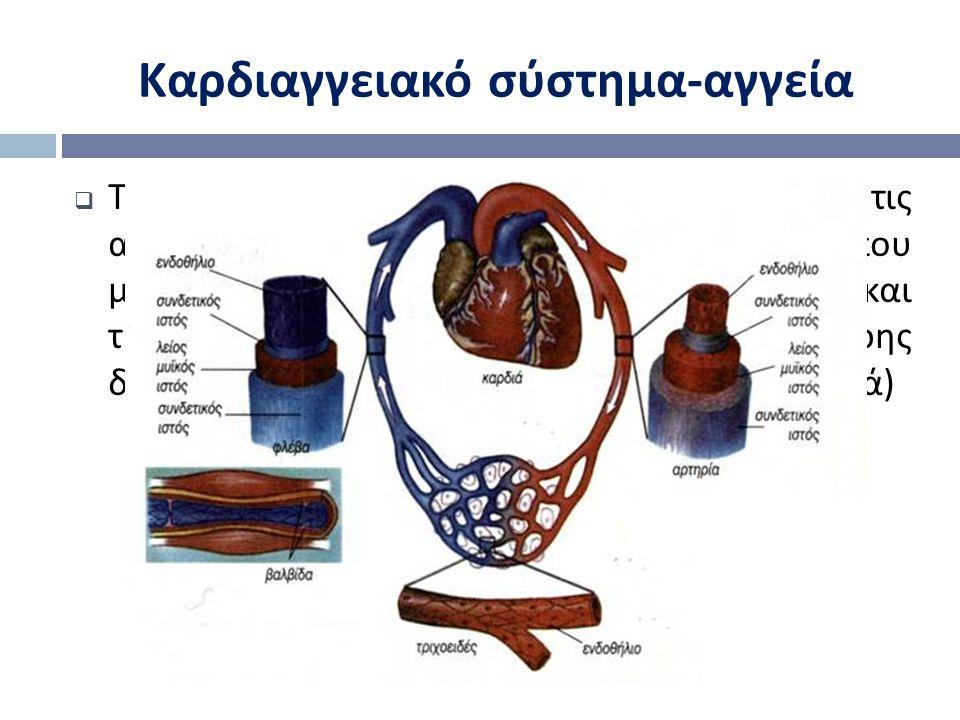  Το αγγειακό σύστημα αποτελείται από τις αρτηρίες ( σωλήνες ιξωδοελαστικές που μεταφέρουν το αίμα μακριά από την καρδιά ) και τις φλέβες ( αγωγοί λεπ