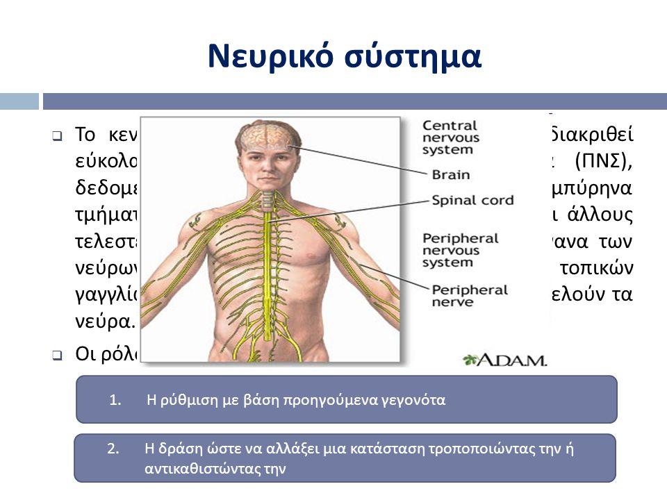  Το κεντρικό νευρικό σύστημα ( ΚΝΣ ) μπορεί να διακριθεί εύκολα από το περιφερικό νευρικό σύστημα ( ΠΝΣ ), δεδομένου ότι περιέχει στο μεγαλύτερο μέρο