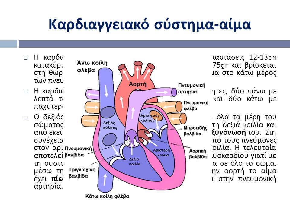  Τελοδιαστολικός όγκος (EDV) = 140ml αίμα  Τελοσυστολικός όγκος (ESV) = 70ml αίμα  Όγκος κτύπου (SV) = EDV-ESV  Υπολογισμός συνολικής καρδιακής εξόδου :  CO = HR * (EDV-ESV)HR: καρδιακός ρυθμός  Το CO είναι ανάλογο του βάρους (W):  CO=224W 3/4  Ενώ ο καρδιακός ρυθμός δίνεται από :  HR = 224W -1/4 Καρδιαγγειακό σύστημα - καρδιά