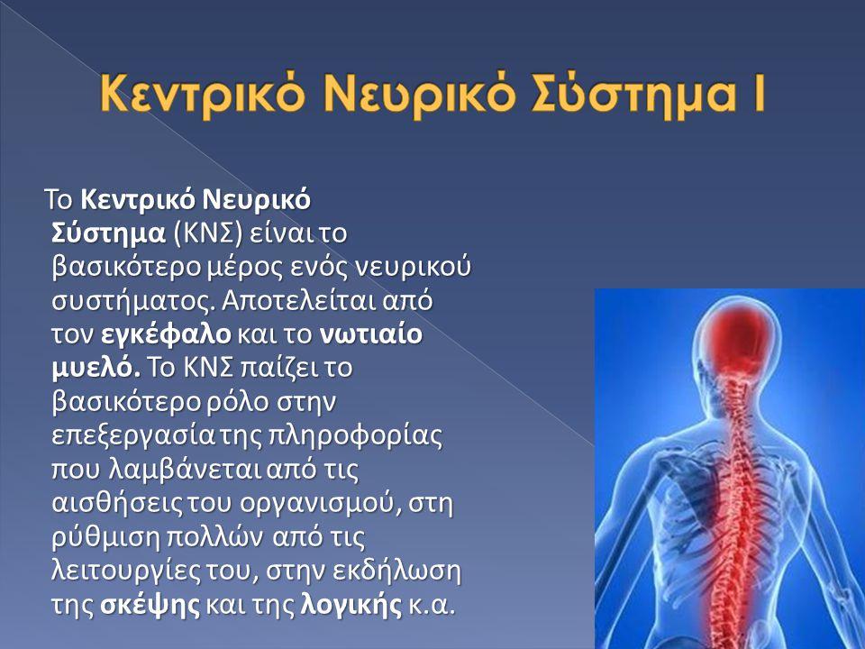 Το Κεντρικό Νευρικό Σύστημα (ΚΝΣ) είναι το βασικότερο μέρος ενός νευρικού συστήματος. Αποτελείται από τον εγκέφαλο και το νωτιαίο μυελό. Το ΚΝΣ παίζει