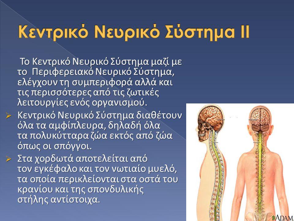 Το Κεντρικό Νευρικό Σύστημα μαζί με το Περιφερειακό Νευρικό Σύστημα, ελέγχουν τη συμπεριφορά αλλά και τις περισσότερες από τις ζωτικές λειτουργίες ενό